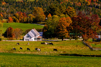 Cattles of Vermont