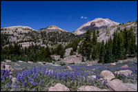 Lupine and Lassen